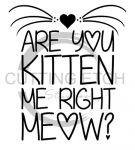 Are You Kitten Me Right Now Animal Designs