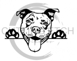 Pit Bull  Animal Designs