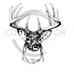 Deer Head Detailed Drawing Fishing and Hunting Designs